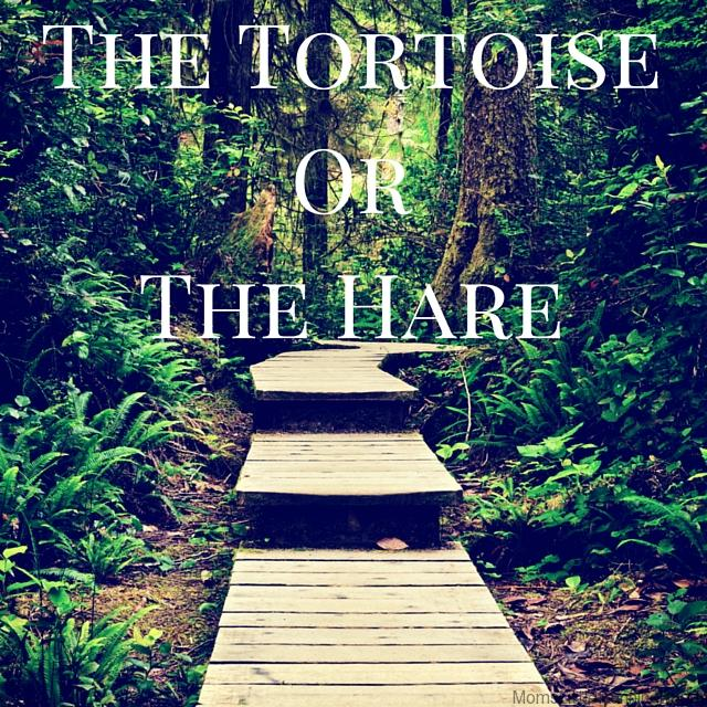 The Tortoise or the haire